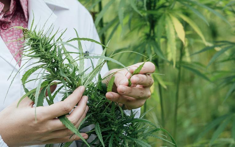Cannabis forbedrer livskvaliteten under kræftbehandlingen?